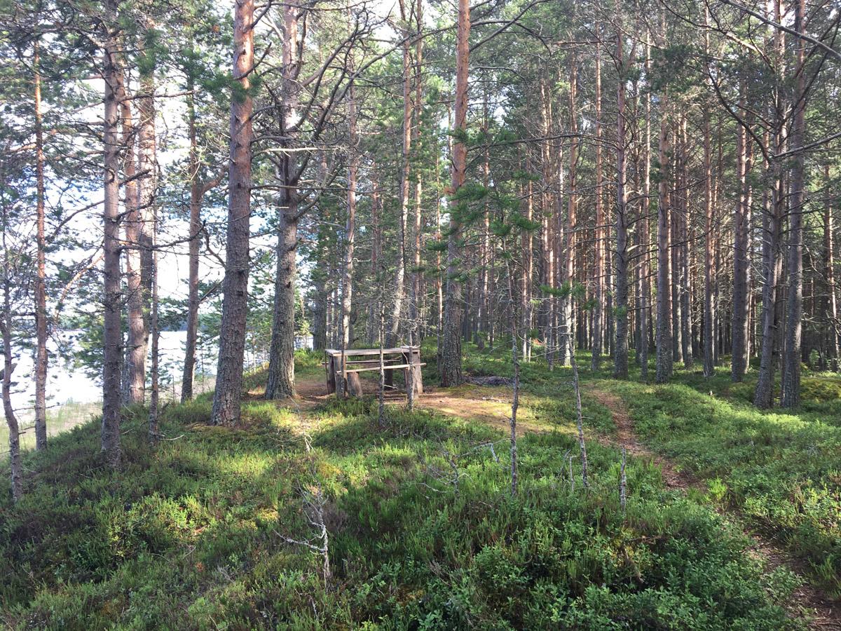 Шелтозерское вепсское сельское поселение